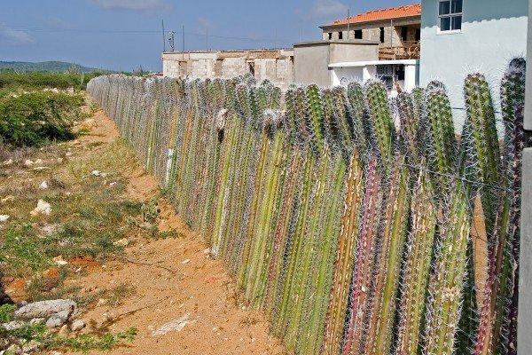 Cactus-Fence-_2