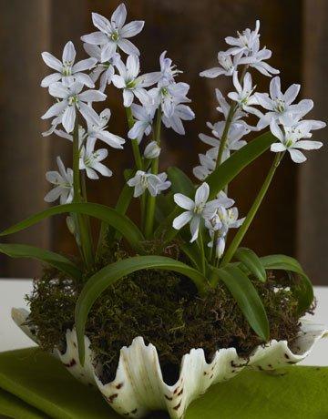 54ea3c5243bbd_-_flowershell-de
